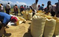 El sector agrícola, una de las principales víctimas de la crisis.